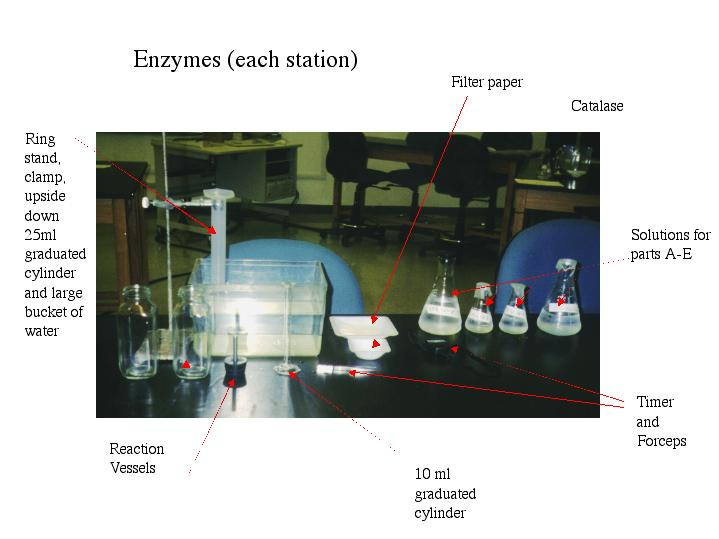 enzymes laboratory report